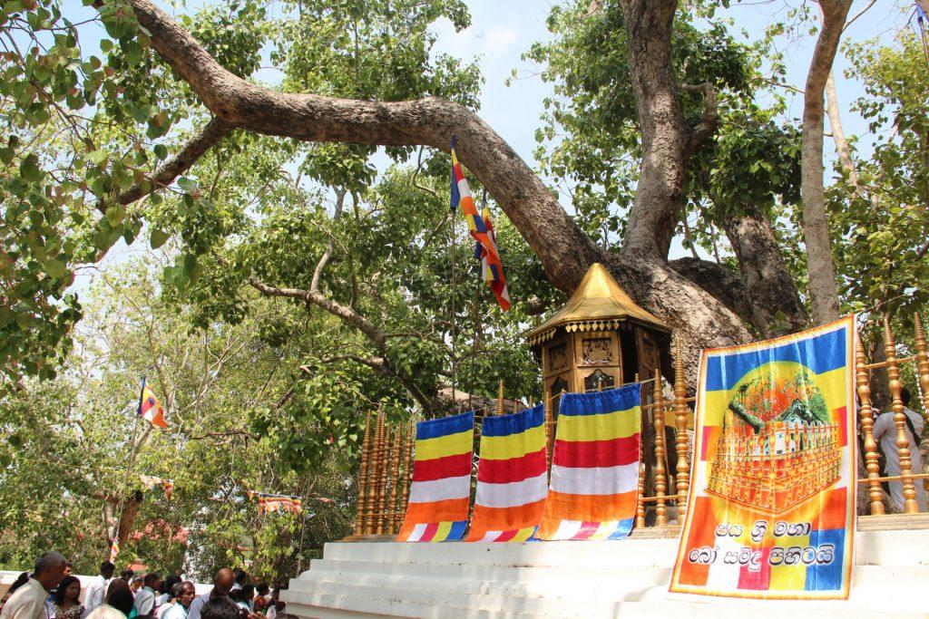 cosa vedere in sri lanka, Anuradhapura. L'albero sacro