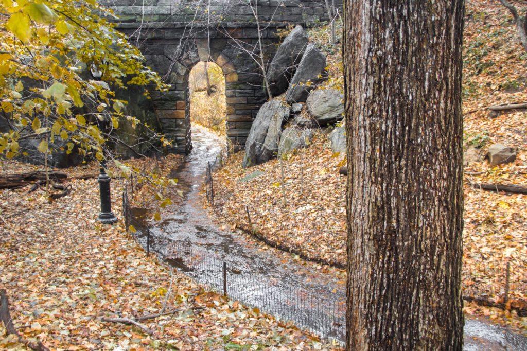 autunno a central park, central park in autunno