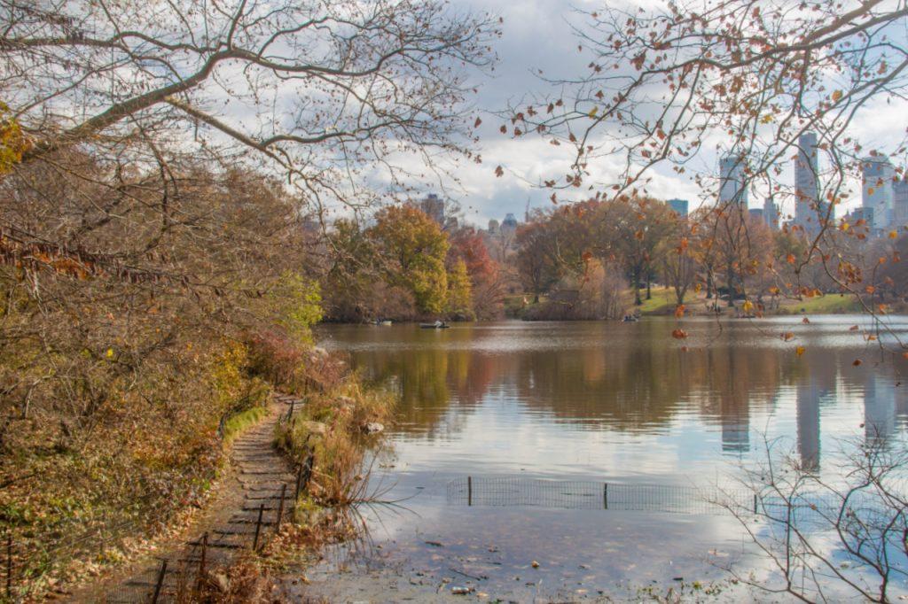 i colori di central park a novembre