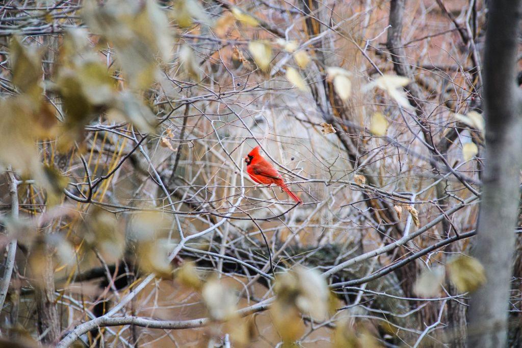birdwatching a central park
