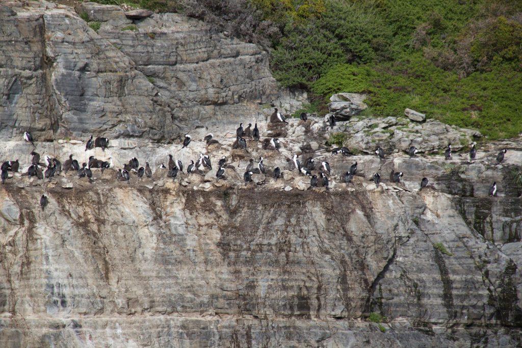 cormorani - verso il ghiacciaio balmaceda