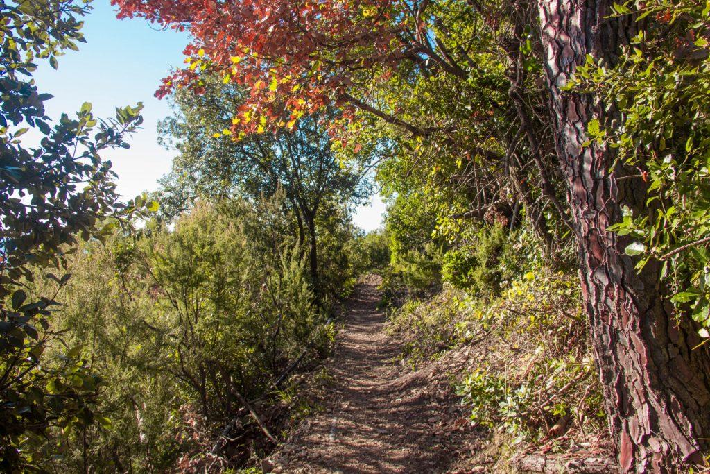 nel bosco lungo il sentiero per monesteroli
