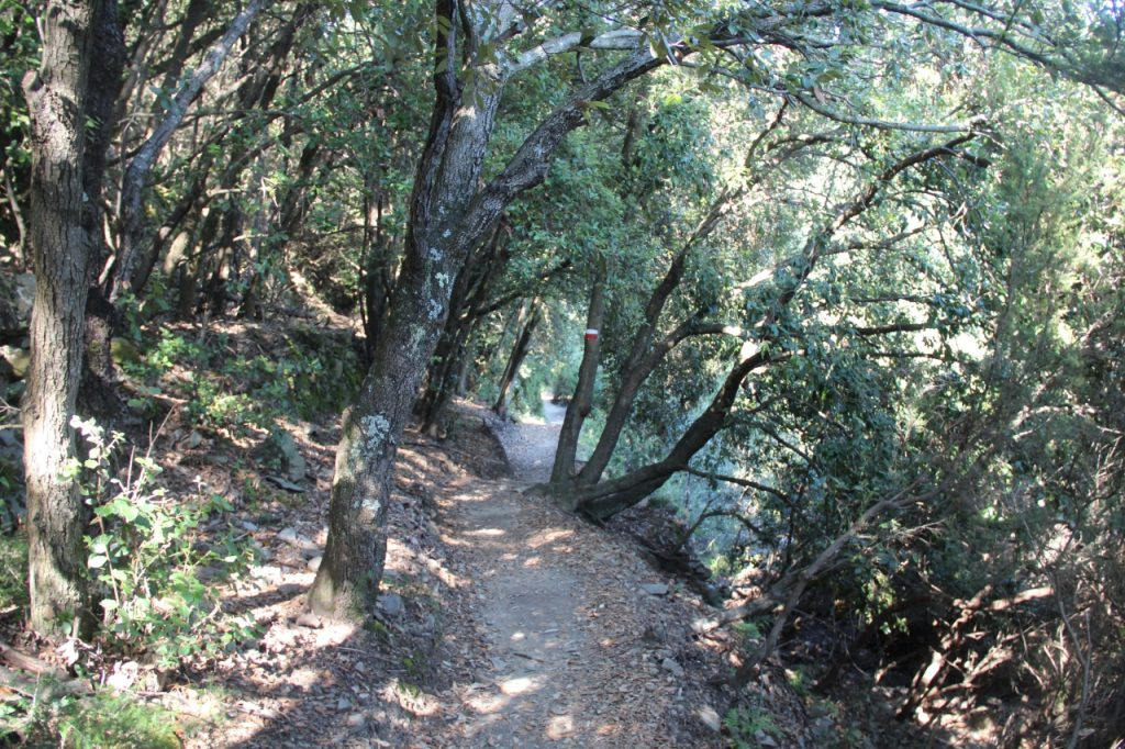 il sentiero corniglia volastra manarola nel bosco