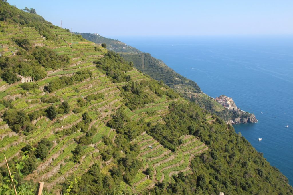 panorama sui vigneti dal sentiero corniglia volastra manarola